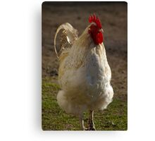 Mister Rooster Canvas Print