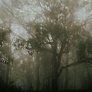 Trees in the mist by Kerry  Hill