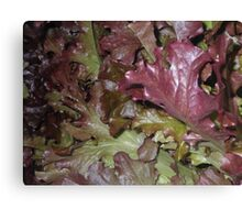 Red Oakleaf Canvas Print