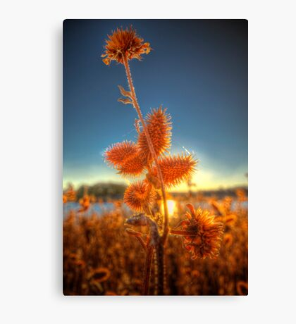 Spiked Sunset Canvas Print