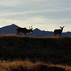 Greater Kudu by Lynn Starner