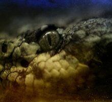 Rattlesnake by Lynn Starner