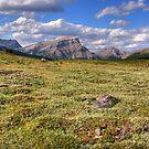 Sunshine meadows III (HDR) by zumi