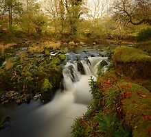 Autumn - River Dovey by Simon Pattinson
