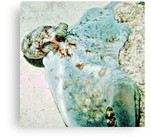 Aqua Caribbean Reef Octopus hugging the Coral Reef Canvas Print