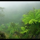 Govets Leap Fern by STEPHEN GEORGIOU