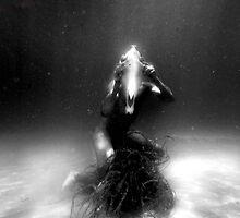 Seahorse by Saschka