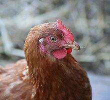 A Chicken by fluffyfeet