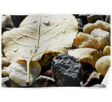 Little yellow leaf Poster