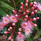 Bursting into Bloom by Meg Hart
