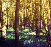 Bluebell Wood by Sybille Sterk