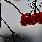 Red Berries by Vee Robillard