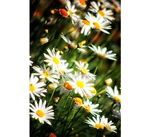 Meadow of Spring Photographic Print