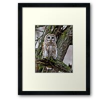 Barred in a tree Framed Print