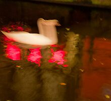 Swan and neon lights reflected in a canal in the red light district of Amsterdam, Holland-4 by Michael Brewer