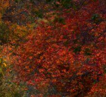 Fall Colors (1470) Sticker