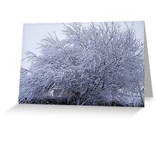 Snow covered willow Greeting Card