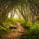 Appalachian Hiking Trail - Blue Ridge Mountains Forest Fog Nature Landscape by Dave Allen