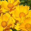 Yellow Sunshine by Lorelle Gromus