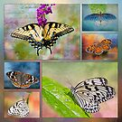 Butterfly Collage by Bonnie T.  Barry
