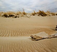 Driftwood and dune by john forrant
