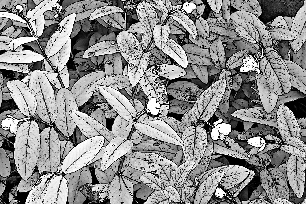 Leaves with Small Flowers  by Ethna Gillespie
