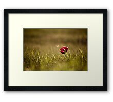 popping  Framed Print
