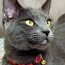 ItsyBitsy...A feline Beauty Star! by PatChristensen