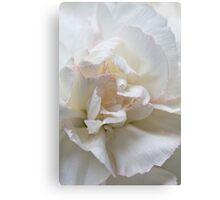 White Carnation Canvas Print