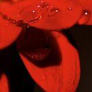 sparkling love  by yvesrossetti