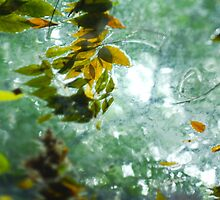 Watery Leaves in Summer by Steve Neville