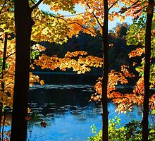 Foliage by the Nashua River by Anita Pollak