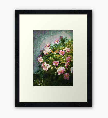 The Queen of The Peony Framed Print