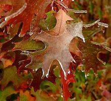 Frozen Oak by Ken Fleming
