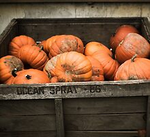 Pile Of Pumpkins by Marcina Frost