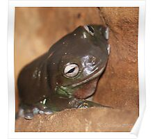 brown froggy Poster