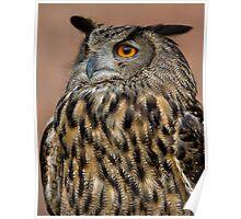 European Eagle Owl  Poster