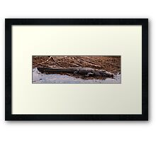 Big Gator Framed Print