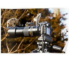 How To Photograph Mexican Wolves Poster