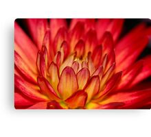 warm red dahlia macro Canvas Print