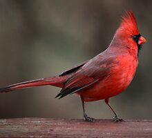 Dressed In Red by Renee Blake