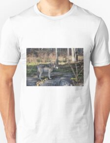 A lone timber wolf in the woods T-Shirt