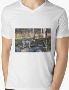 A lone timber wolf in the woods Mens V-Neck T-Shirt