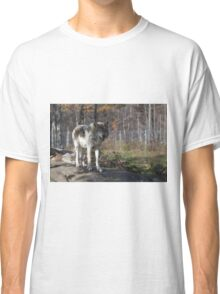 Timber wolf in the woods Classic T-Shirt