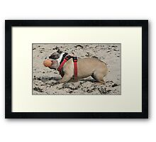 Ball Crazy Framed Print