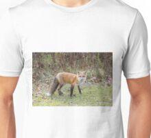 A lone Red Fox Unisex T-Shirt