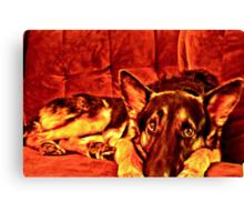 German Shepherd- HDR Canvas Print