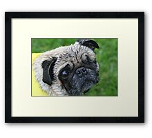 Caution - Wet Pug Framed Print