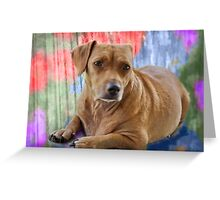 Honey Bear in Color Greeting Card