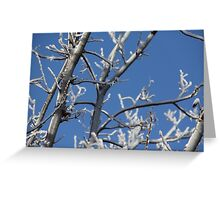 Iced Over Tree in Winter Greeting Card